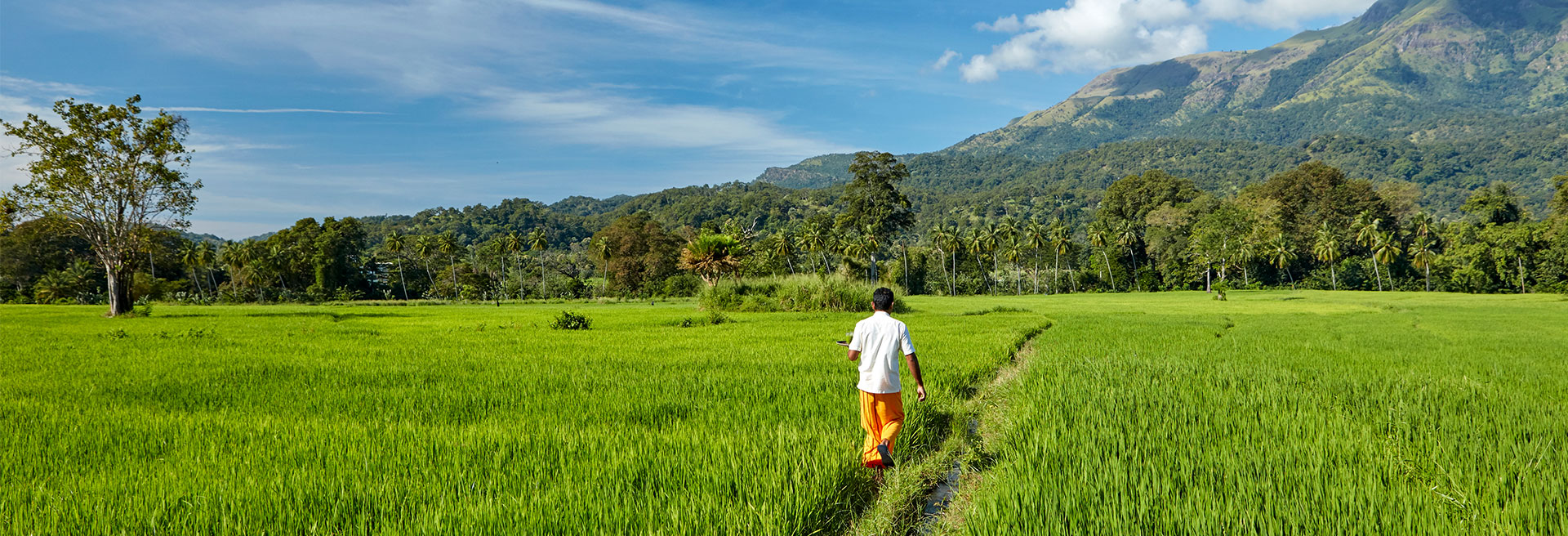 Man Walking Through A Paddy Field