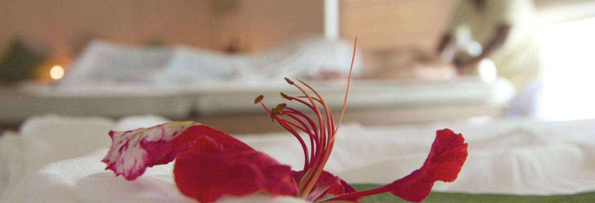 Flower in spa