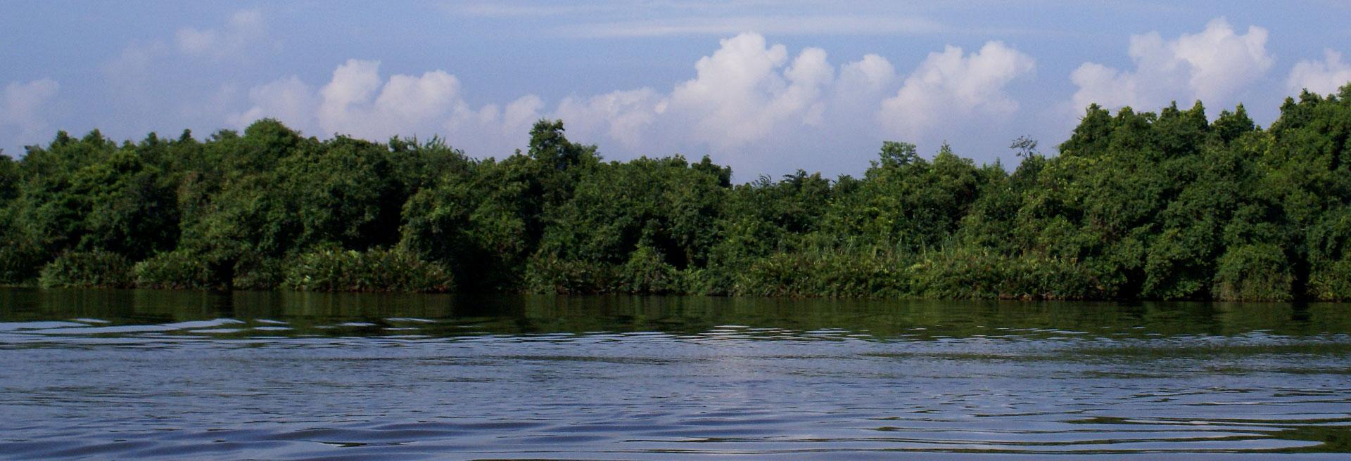 river facing the mangroves