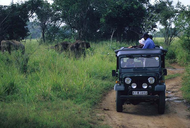 Elephant Safari at Wilpattu