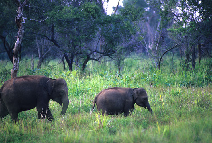 Elephant Watching Safaris