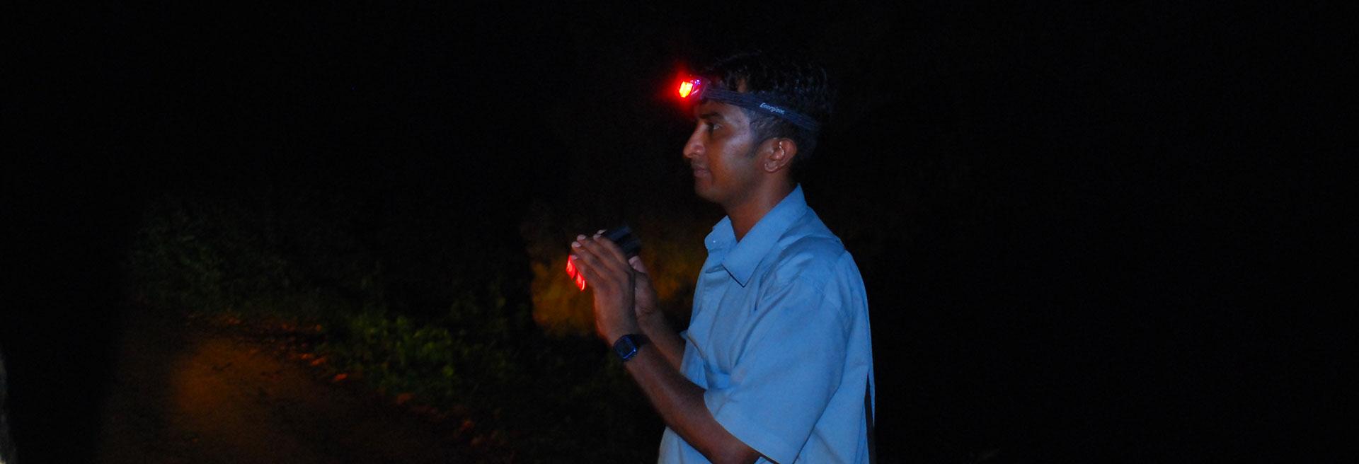 Loris night trail