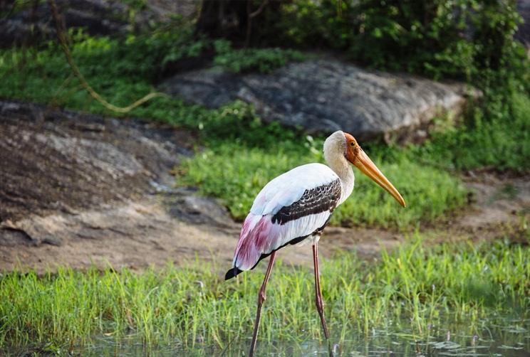 Species of birds in their natural habitat