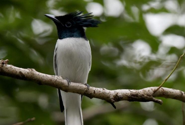 Bird in habitat