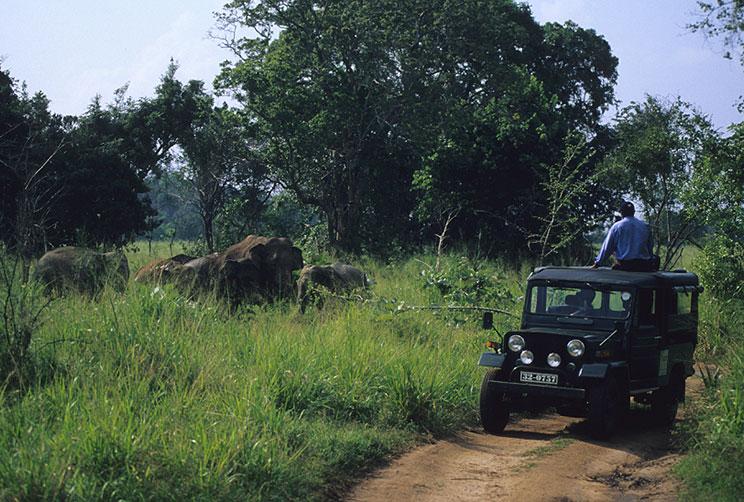 Wilpattu Elephant Safari