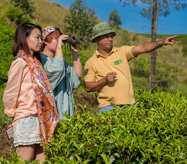 Tea plantation visits