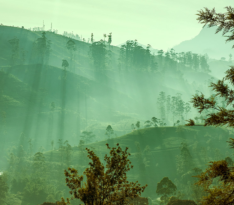 Landscapes of Nuwara Eliya