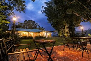 Outdoor dining with lights under trees