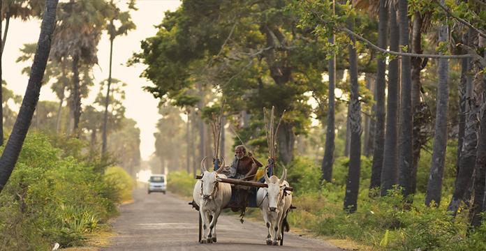 Jetwing Mahesa Bhawan